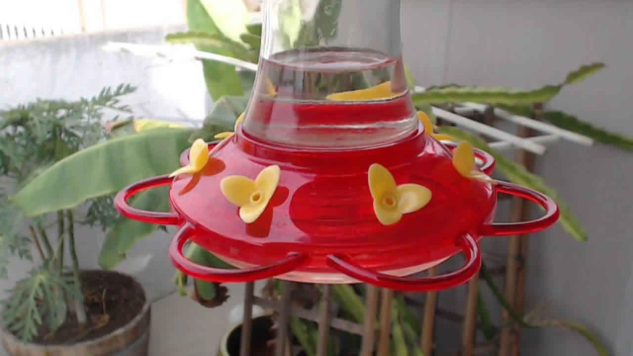 Bella Hummingbird Nest